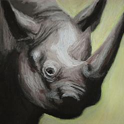 RhinoPastel on Paper