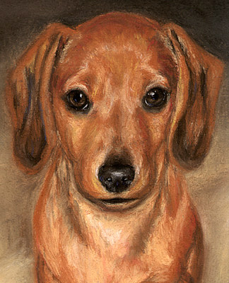 Pet Portraits Ct Dog Paintings Cat Paintings